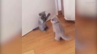 【逗丫典经】20170303第三集之猫咪萌宠集锦