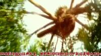 《金刚:骷髅岛》发IMAX倒计时视频,金刚怒吼震破天际,凶险莫测与神秘震撼。