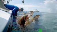 大型食人鱼 被钓起 全身黄色 感觉火山里面跑出来的钓鱼人厉害了