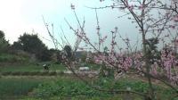 渐渐变化的自贡釜溪河樊家坝