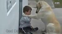 狗的感人视频