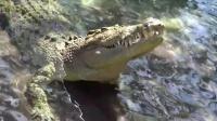 邓紫棋舍命飞渡鳄鱼池 双腿发软被推下河