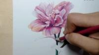 【又画】木槿花-彩铅基础-又画视频教程