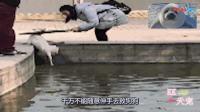 流浪狗不幸落水却无人敢救, 一位路过的女子冲了过去