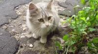 流浪猫20