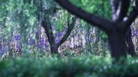 在浦东——家门口的宁静幽深……