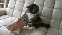 【嘿姆仔】可爱小憨猫Maru:I am Maru