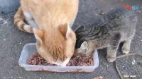 喂养流浪猫, 小猫太可怜了❤吻