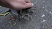 随心分享08  可爱的小猫咪