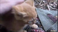 mv 喂食流浪猫
