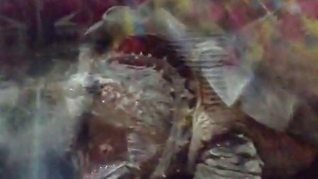 吓人的鳄龟
