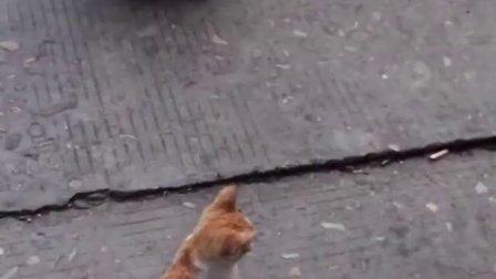 小葱葱和猫咪谈心
