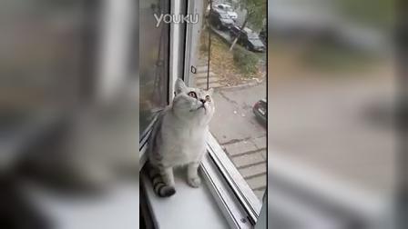 好专注的猫咪......