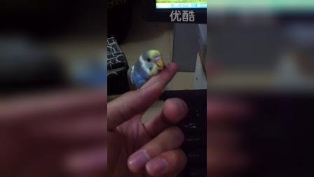鹦姿鸟舍---亲人鹦鹉可以这样玩。