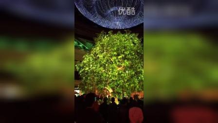 澳门永利酒店发财树