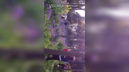 20150320顾村公园花