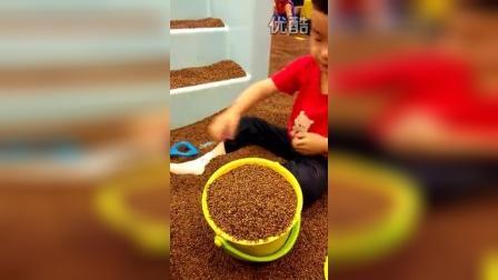 文鼎玩沙子,五岁了