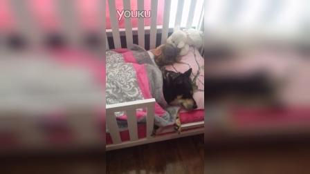 SO cute!狗狗跟小主人一起睡觉