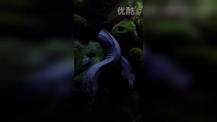 海底世界6