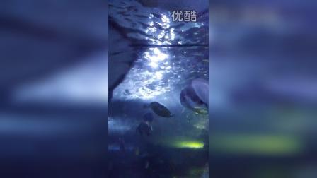 海底世界16