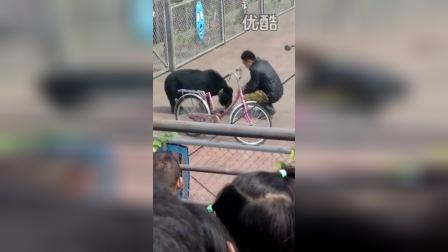 VID_20150406_野生动物园熊表演5
