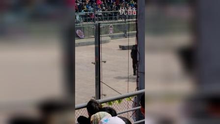 VID_20150406_野生动物园熊表演8