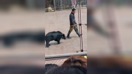 VID_20150406_野生动物园熊表演6