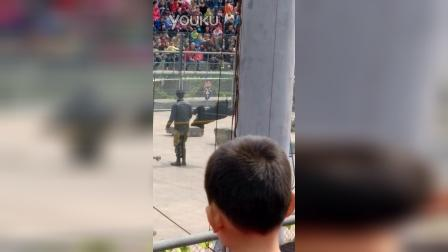 VID_20150406_野生动物园熊表演1