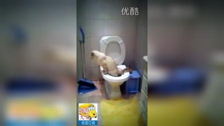 搞笑,小宠物狗拉完粑粑,还会用水冲厕,聪明干净。