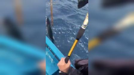 C&Z测试新款铁板竿中马鲛
