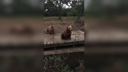 动物园 熊