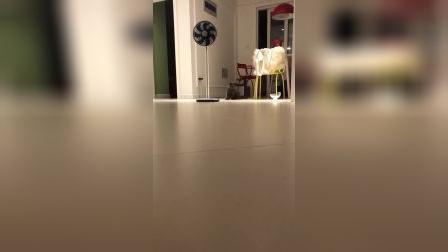 猫:就走猫步而言,一定要做到与众不同的样子