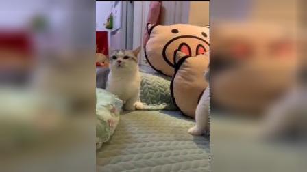 猫咪:我真的受不了这种委屈,所以我要离开你了