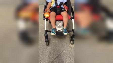 从小就走上人生巅峰的铲屎官,这样带着猫咪出去太酷了