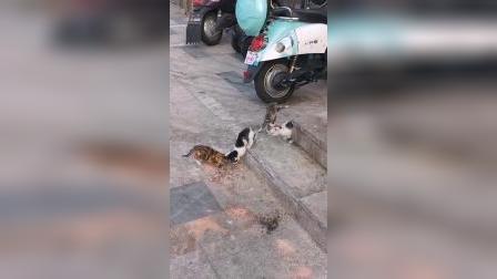 有些时候,出生就决定了命运,猫咪亦是如此