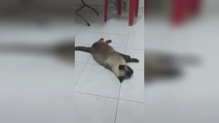 猫:这椅子有毒!