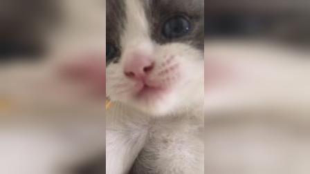 叫声这么甜的小奶猫,你想吸吗?