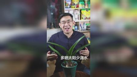 什么植物是应季的开花种球植物