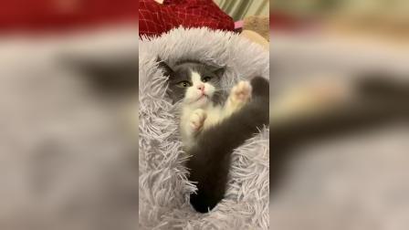 冬天可以这样逗猫玩,快乐是成倍的!