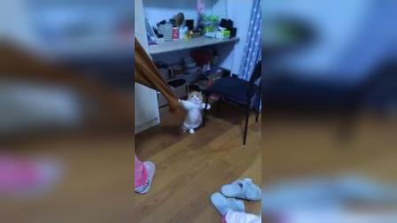 橘猫:来啊,高手一决高下啊!