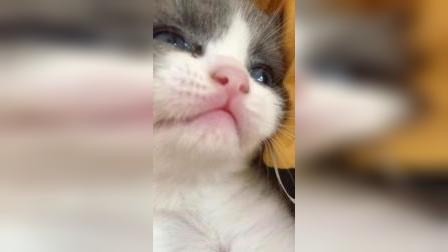 我就用一只小奶猫来萌化你!