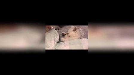 猫咪这种生物,连睡个觉都感觉特别萌呢