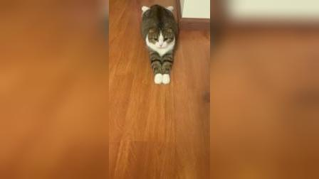 怎么会有这么可爱的猫咪?好想吸