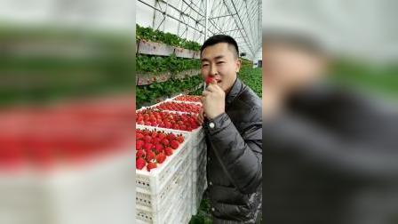 我们都是用园里新鲜草莓制作罐头的 放冰箱随时都可以吃 随手零食 喜欢你话 支持一下吧谢谢