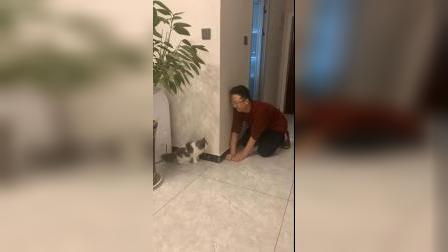 猫和男人的快乐有时候就是这么简单
