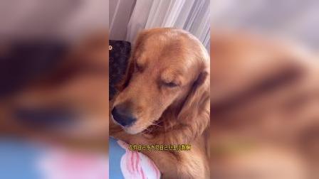 狗狗:你给我走开,我困了