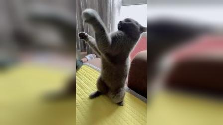 猫咪:有种你就不要动,看我不咬你