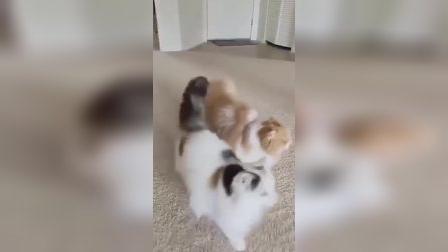 2只猫交叉前进,我可以看一整天!