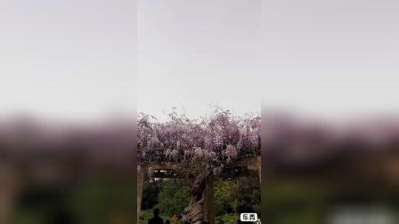 """百花赞——牛年春日百花艳,妩媚楚楚""""武则天""""。朵朵海棠吐芳气,是花皆发忒烂漫!"""