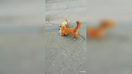 小狗欢    人爱见